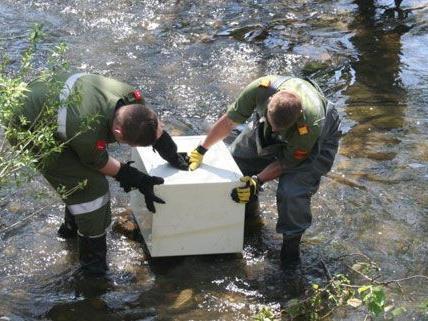 Einige Tage nach dem Diebstahl wurden die gestohlenen Tresore in der Pinka entdeckt und von der Feuerwehr geborgen.