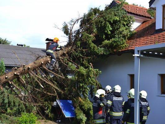 In Folge der teils schweren Unwetter musste die Feuerwehr mehrere umgestürzte Bäume bergen