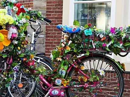 Radfahrern werden auf der Hasnerstraße künftig Rosen gestreut