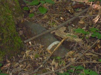 Eine Frau entdeckte beim Wandern in Döbling das Relikt aus dem II. WK.