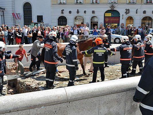 Feuerwehr-Einsatz: Das Fiaker-Pferd geriet nach dem Sturz in die Ausgrabungsstätte am Michaelerplatz