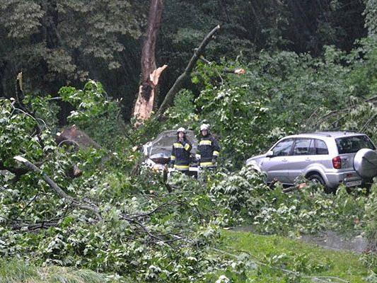 Durch die Unwetter gab es in Niederösterreich zahlreiche Beschädigungen - unter anderem stürzten Bäume auf Autos