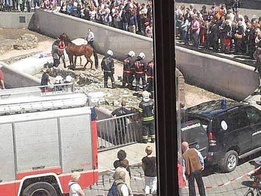 Aufregung um ein Pferd, das mitten in die Ausgrabungen am Michaelerplatz geriet
