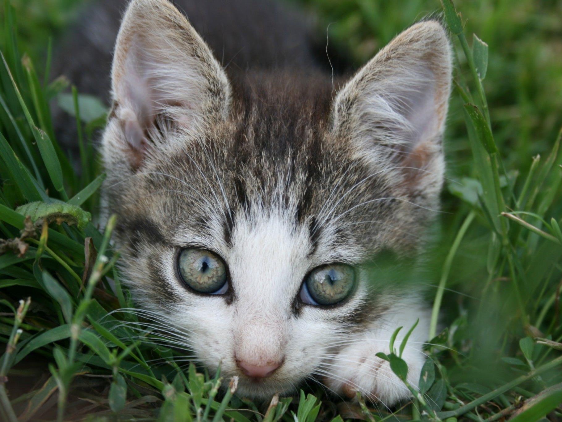 Studie legt Verbindung zwischen Katzen und Selbstmorden nahe.