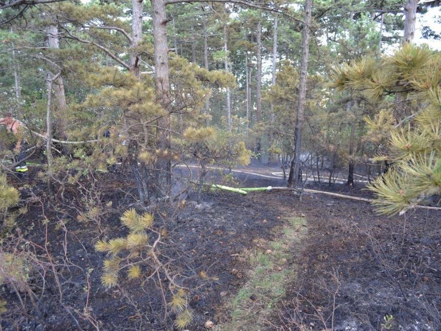 Am Sonntag kam es aus noch ungeklärter Ursache zu einem Waldbrand in NÖ.