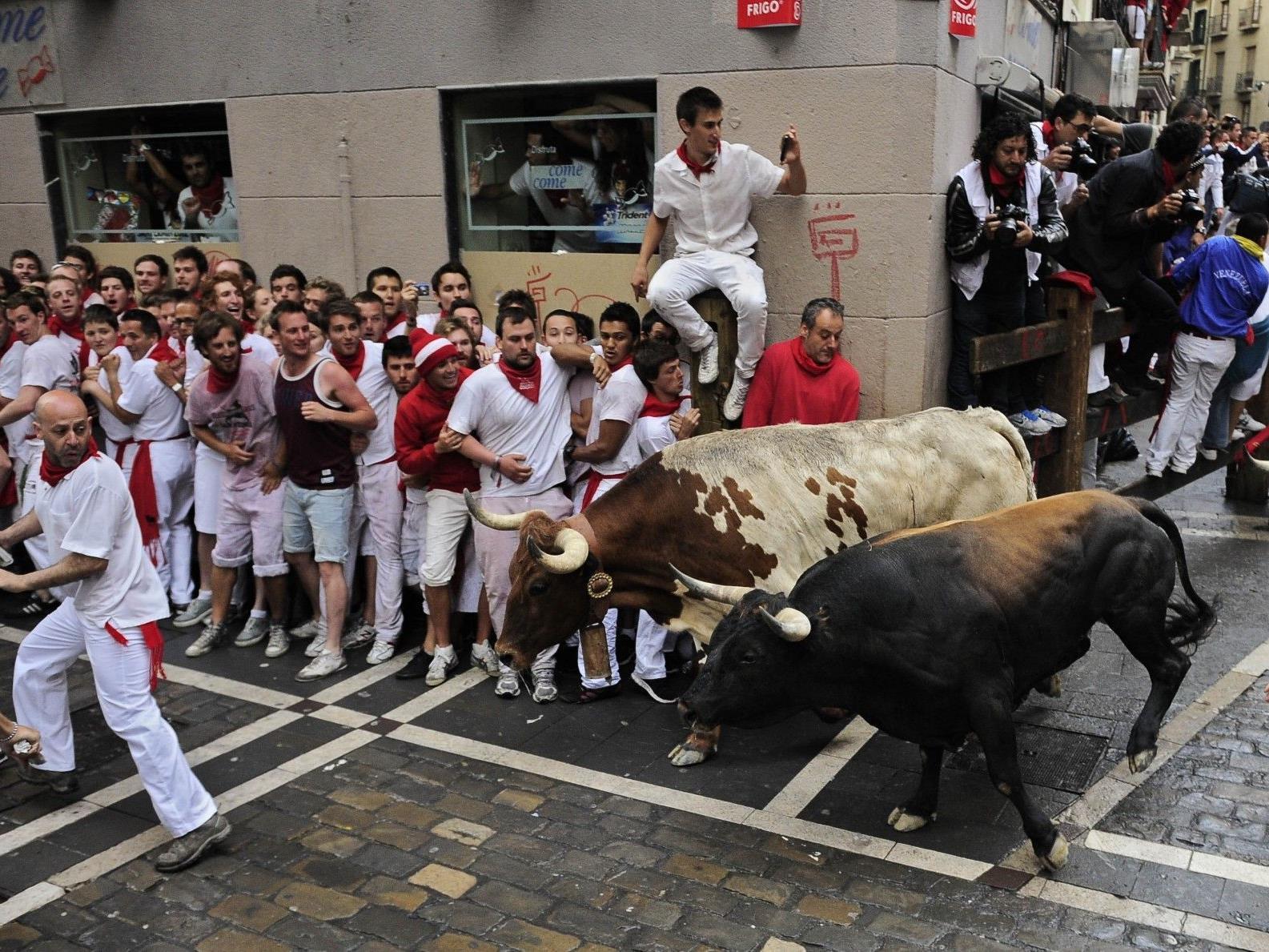 Ausbrechendes Tier löst Panik bei Teilnehmern aus .