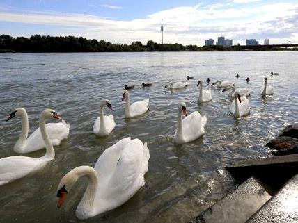 Auf der Alten Donau wird es bei der Vollmondfahrt am 1. August so richtig romantisch.