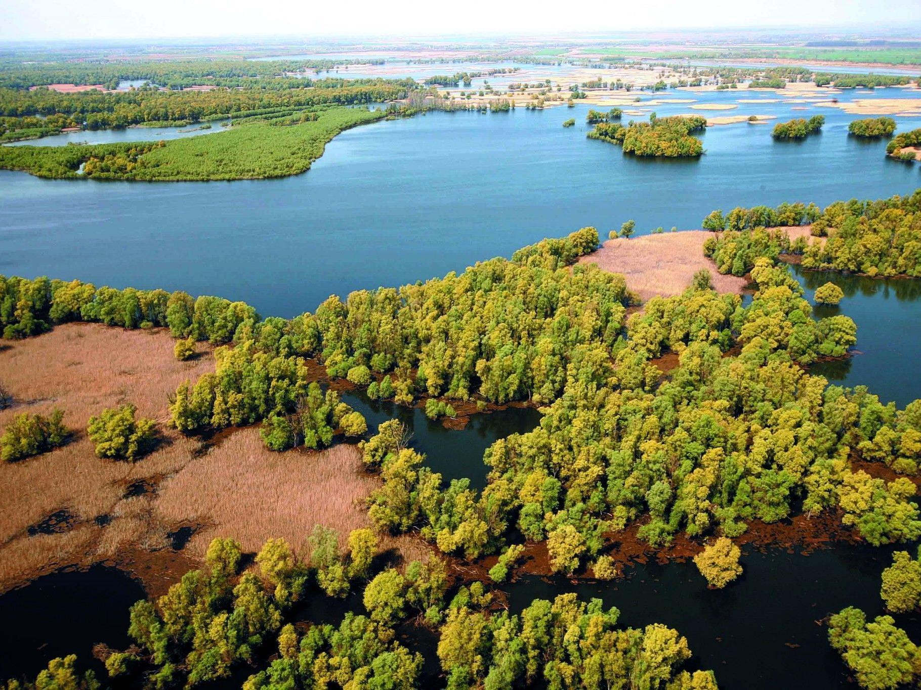 Mathematisches Modell zeigt, dass das Artensterben im Amazonas zeitverzöger ist.