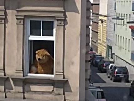 Ein Bär mitten in Wien! Wenn auch nur aus Plüsch ...