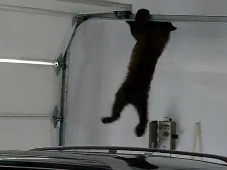 Mama rettet ihren kleinen Bären aus Garage.