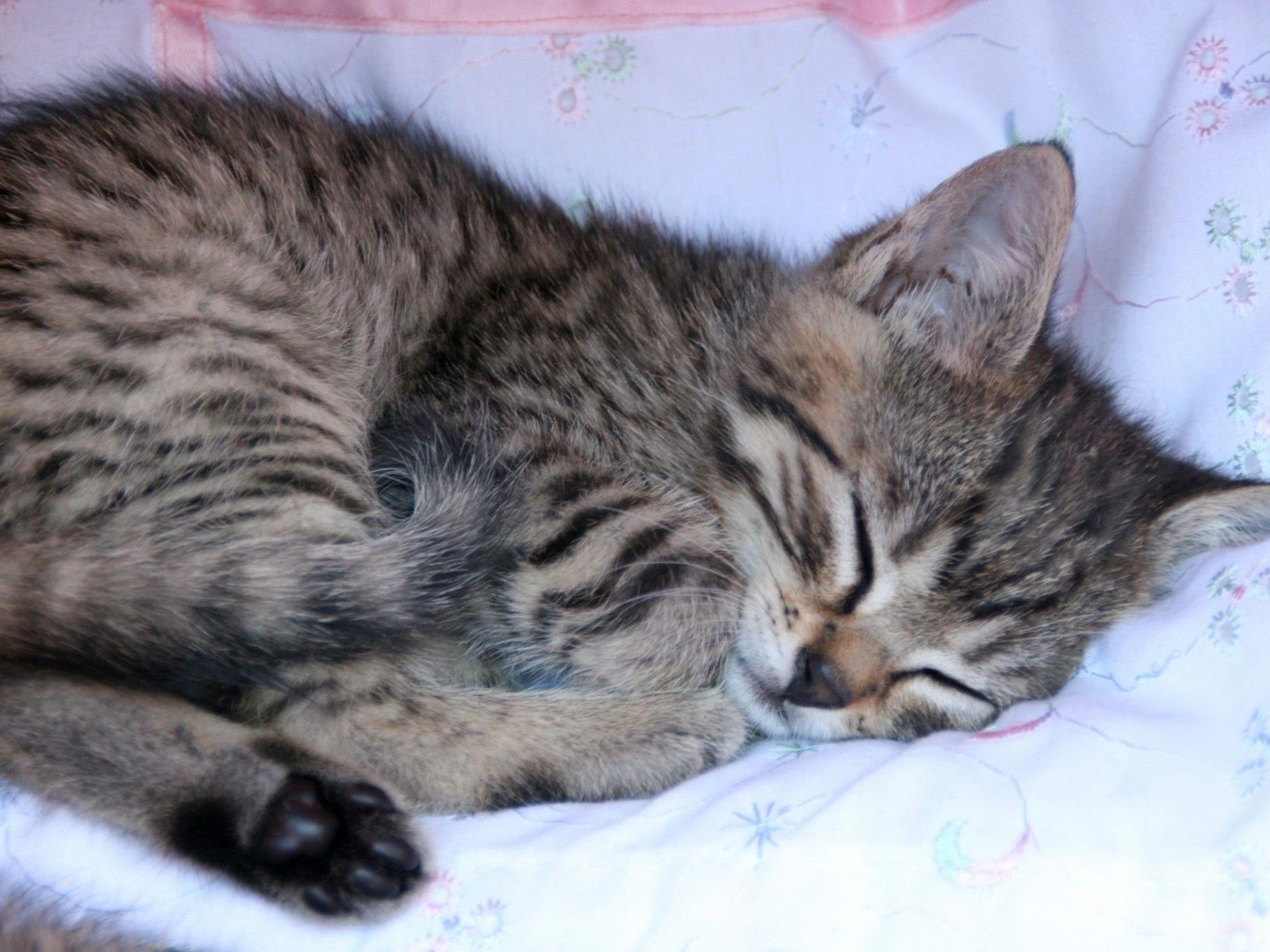 Das Kätzchen wurde nach der Rettung ins Linzer Tierheim gebracht.