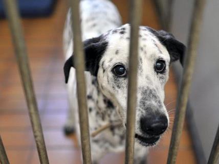 Die Tierschutzvereine setzen sich mit einem Lauf ein.