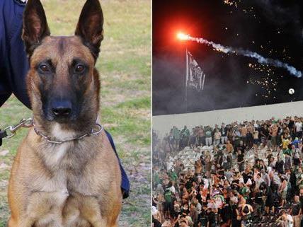Mit Polizeihunden werden die Busse der PAOK-Fans kontrolliert.
