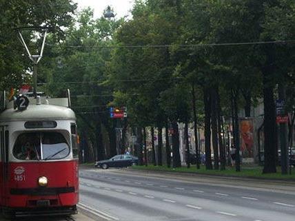 Für die 77 gerodeten Bäume auf der Ring Straße werden neue Pflanzen eingesetzt.
