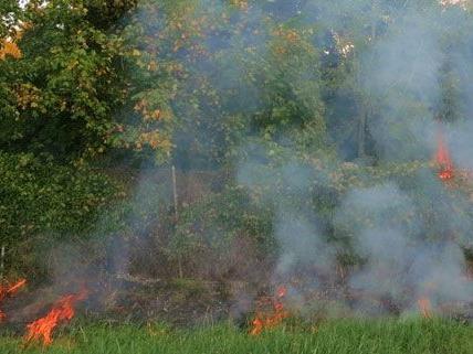 Vermutlich löste eine weggeworfene Zigarette den Brand bei den Steinhofgründen aus.