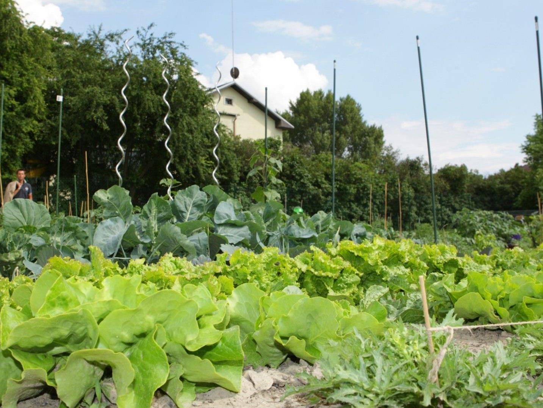 Nun gibt es auch internationales Interesse an Wiens Nachbarschaftsgärten.