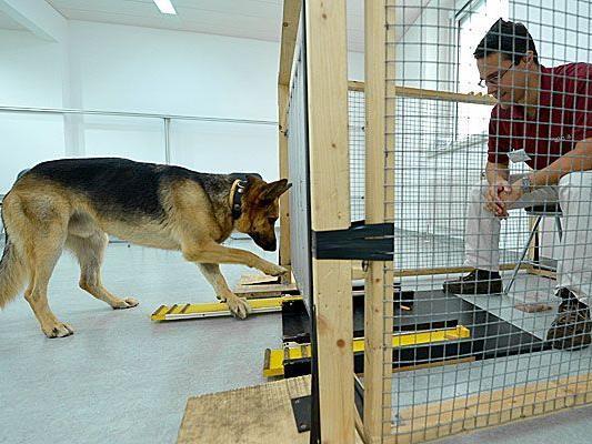 Am Clever Dog Lab an der Vetmeduni Wien wird das Verhalten von Hunden erforscht