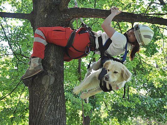 Gut trainierte Rettungshunde bleiben auch beim Abseilen ganz entspannt