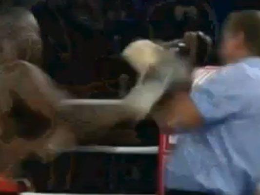 Übel erwischt: Nach diesem Treffer ging der Wiener Ringrichter auf den Boden.