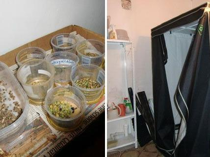 In ihrer Wohnung soll die Frau die Cannabis angebaut haben.