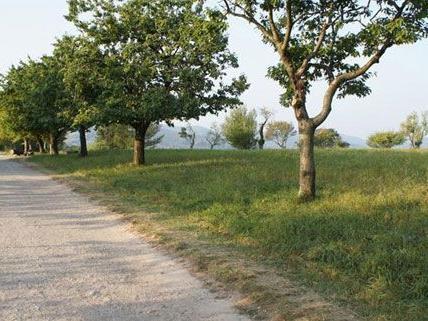 600 Wohnungen sollen auf dem Areal der Steinhof-Gründe entstehen.
