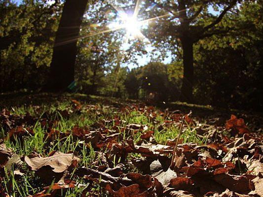 Das Wochenende hat jede Menge wunderschöne Herbst-Sonne zu bieten