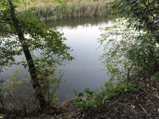 An diesem Ort in der Au an der Donau im Gemeindegebiet von Muckendorf (Bezirk Tulln) wurde die Frauenleiche entdeckt