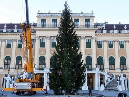 Am Dienstag wurde vor dem Schloss Schönbrunn der Christbaum aufgestellt.