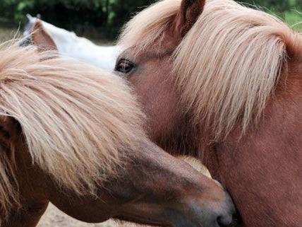In der Wiener Stadthalle dreht sich vom 8. bis 12. November alles rund ums Pferd.