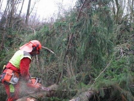 Schwerer Forstunfall im Weinviertel
