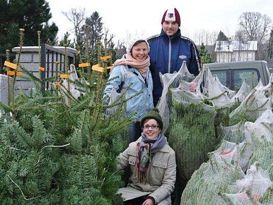 Wien Weihnachtsbaum Kaufen.Lebende Christbäume In Wien Green Rabbit Bietet Praktische
