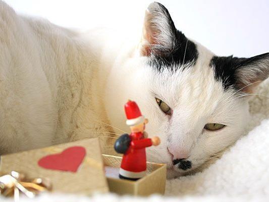Auch Haustiere erhalten oftmals Weihnachtsgeschenke - diese sollten aber für das Tier geeignet sein