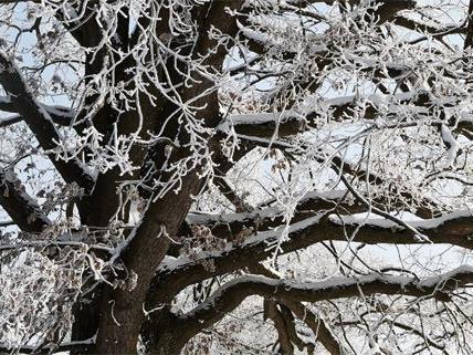 Die Eislast auf den Bäumen führte zu einer Sperre des Lainzer Tiergartens.
