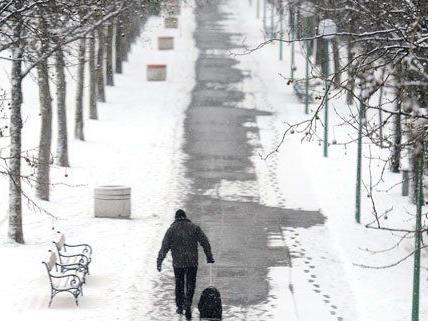 Forstamt Wien: Parks wegen Eislast gesperrt verursachte Sperren