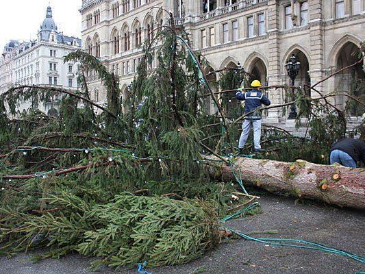 Dieser Christbaum war der ganze Stolz des Wiener Christkindlmarktes - nun wurde er gefällt