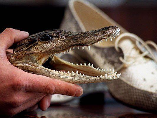Immer wieder werden am Flughafen lebende Tiere oder illegale Tierpräparate sichergestellt - wie etwa ein Krokodil