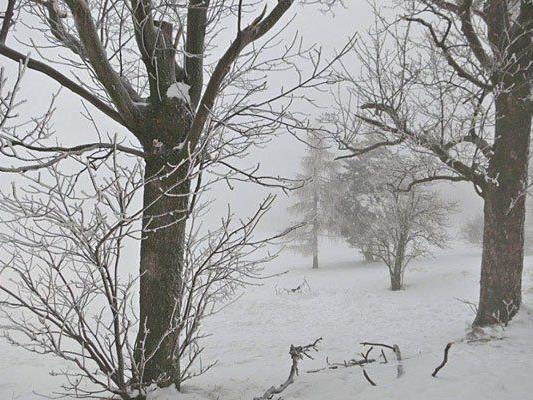 Das malerische Gelände am Steinhof verschwindet derzeit im Schnee