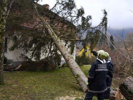 Der Sturm hat in Altenmarkt an der Triesting einen Baum auf ein Wohnhaus gefällt.