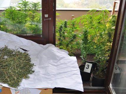 Die Cannabis-Plantage wurde in einer Wohnung in Krems ausgehoben.