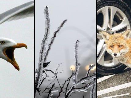 """Auf ihrer Internetseite zeigen vier Fotografen Wien von seiner """"wilden"""" Seite."""