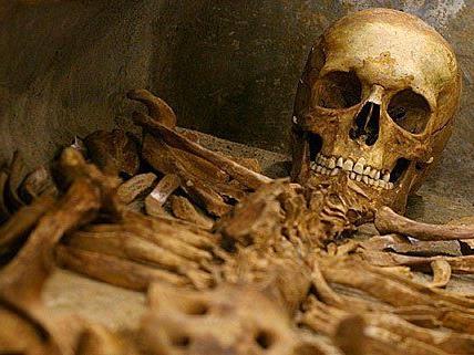 Alte Skelettteile wurden in Traismauer in Plastiksäcken gefunden