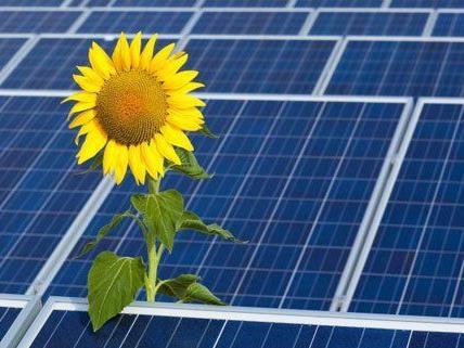 Mit Äußerungen zu den Bürgersolarkraftwerken sorgte Wien Energie am Montag für Wirbel.