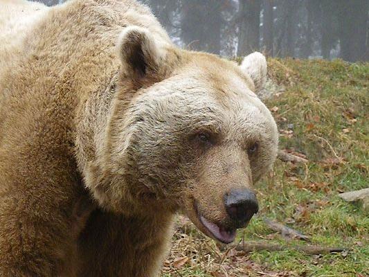 Das ist Bär Vinzenz