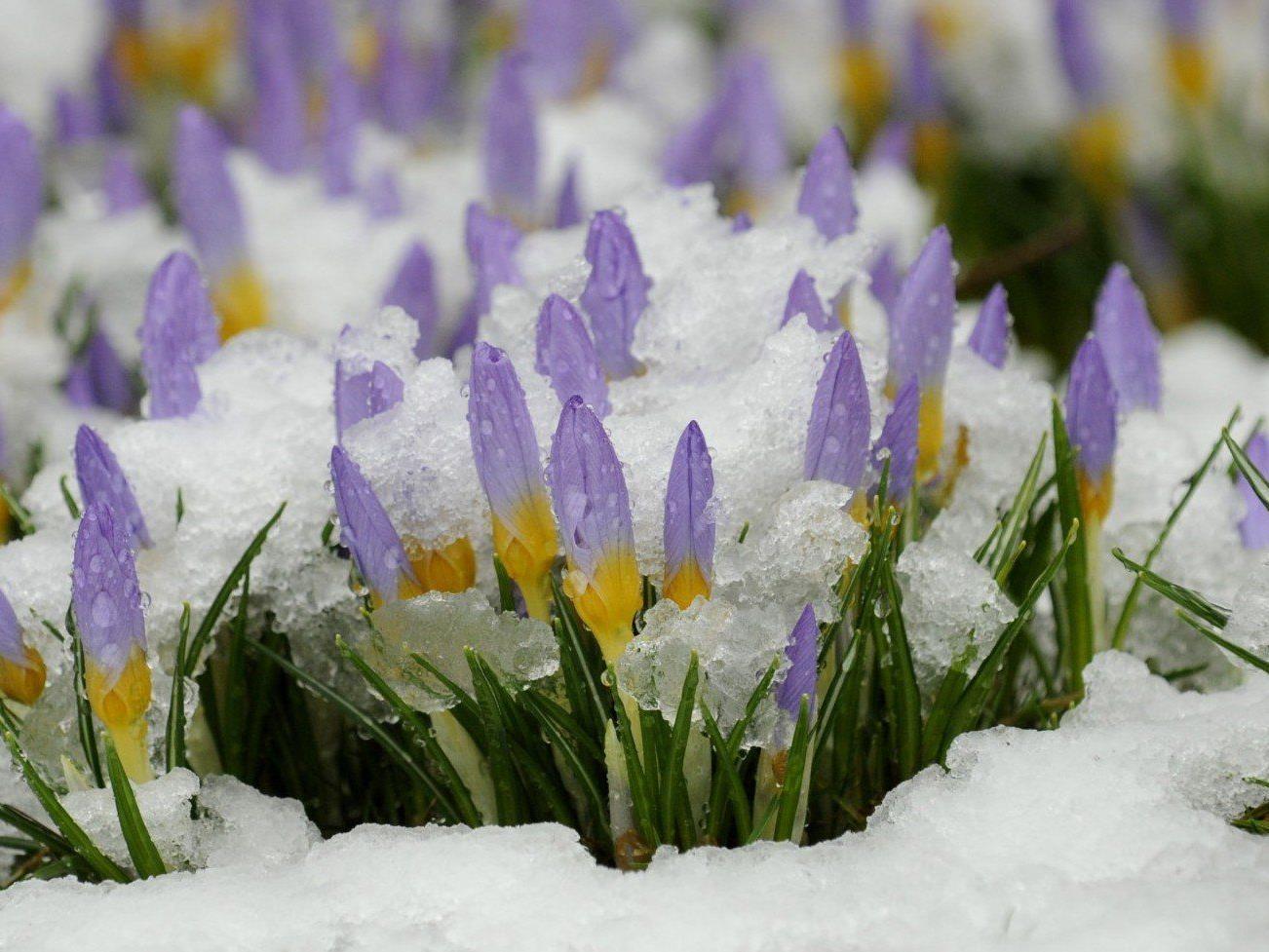 Schnee und Regen: Der Frühling lässt noch auf sich warten.