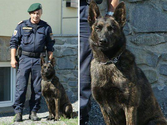 Abteilungsinspektor Andreas Riffer mit seinem Diensthund Crash of Silvermoon