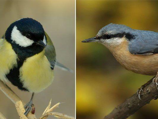 Von Kohlmeise bis Kleiber: Die schönsten Vogelstimmen kann man im Tiergarten Schönbrunn unterscheiden lernen