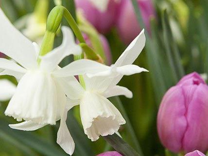 Die Blumenbeete im öffentlichen Raum werden in den kommenden Tagen bepflanzt.