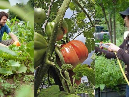 Urban Gardening kann ganz unterschiedliche Formen haben.