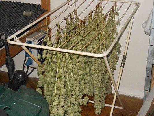 In der Wohnung in Penzing wurde Marihuana in großem Stil aufgezüchtet und getrocknet