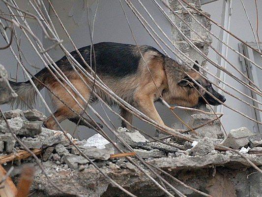 Am Tag des Rettungshundes zeigen ganz besondere Helfer, was sie können
